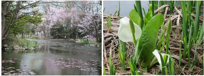 20190425道庁の池