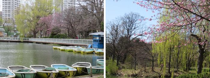 20190425中島公園菖蒲池