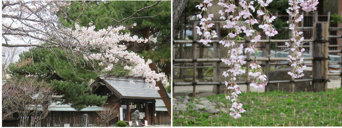 201905護国神社・中島公園