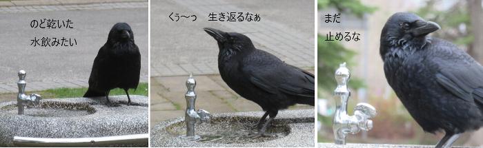 201905中島公園カラス