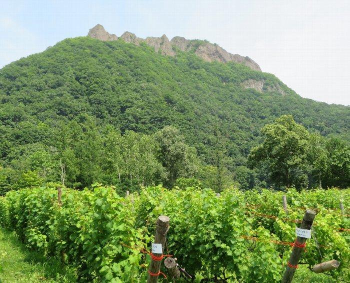 八剣山とブドウ園