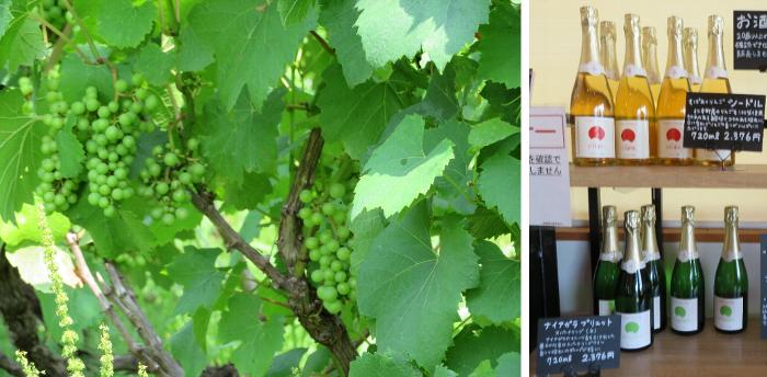 20190728八剣山ワイナリー ブドウとワイン