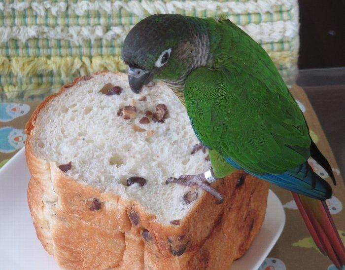 カキツバタ あずき食パン