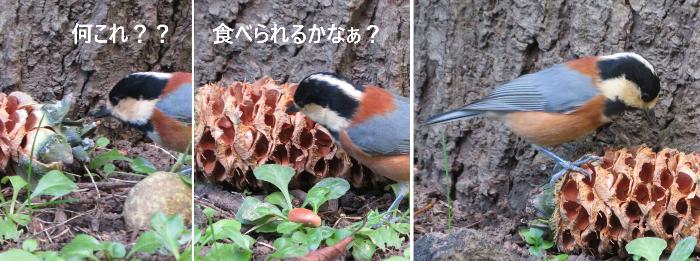 201909円山公園ヤマガラ