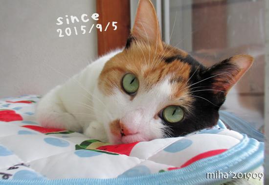 miha19-09-35s.jpg
