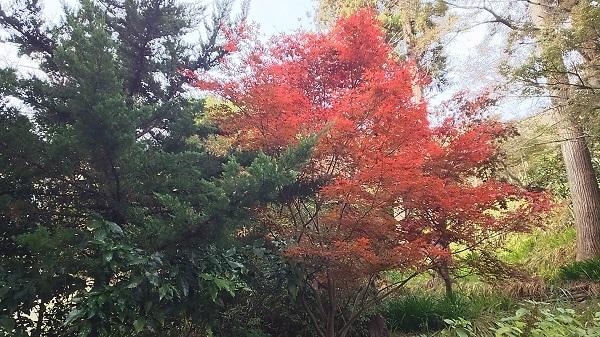境内の緑と紅葉