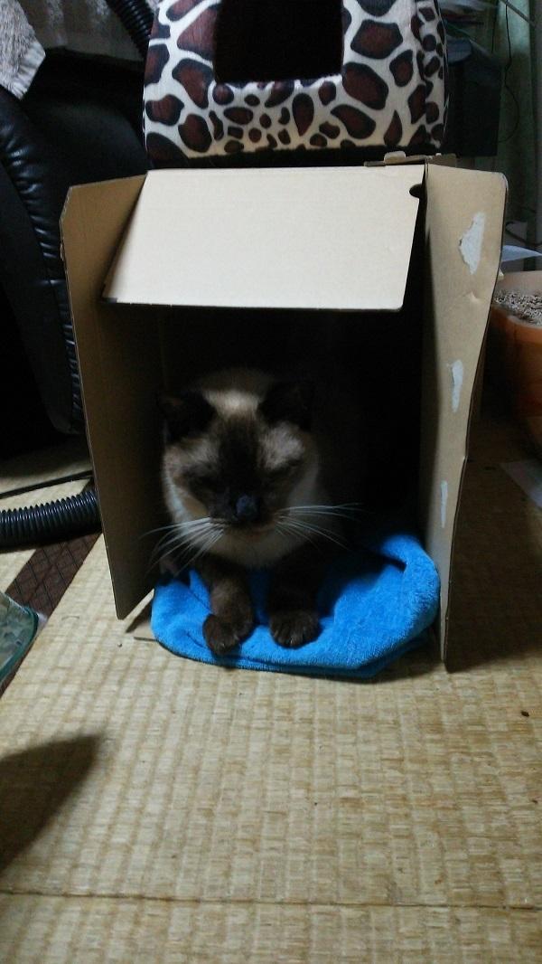 猫ハウス2