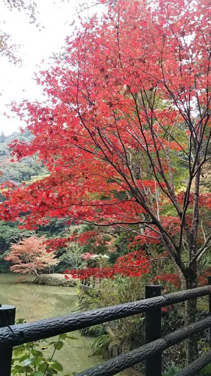 小松寺の紅葉1