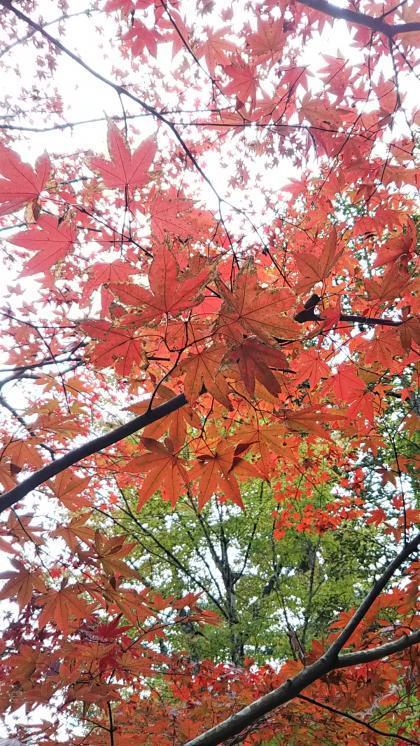 小松寺の紅葉2