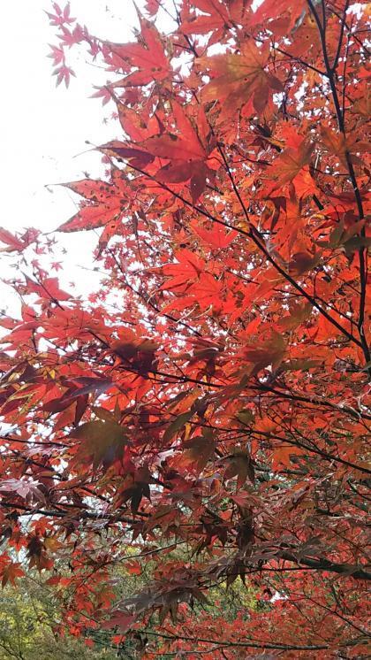 小松寺の紅葉3