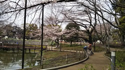 2019桜1