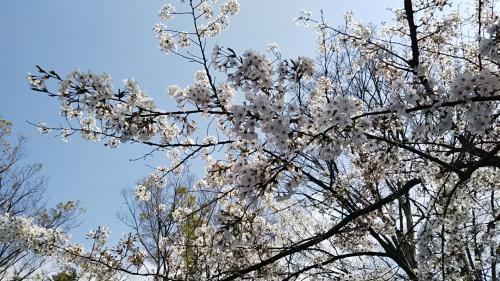 2019桜9