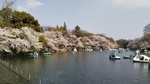 2019桜7