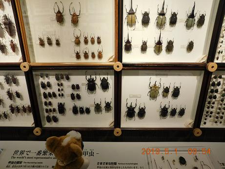 DSCN1589ひがし大雪記念館 (6)