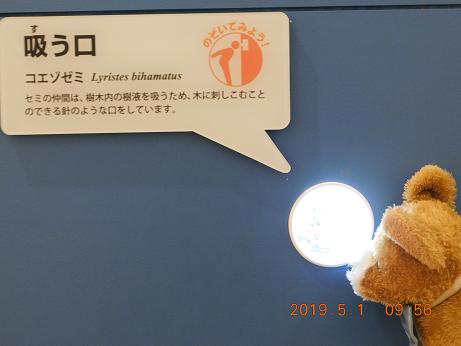 DSCN1589ひがし大雪記念館 (9)