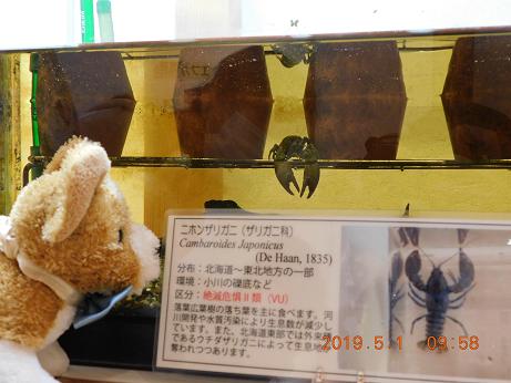 DSCN1589ひがし大雪記念館 (12)