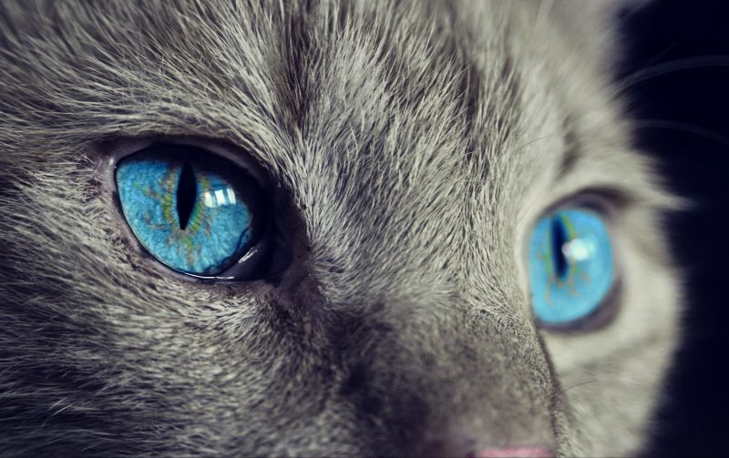 cat-1285634_1920_20191004.jpg