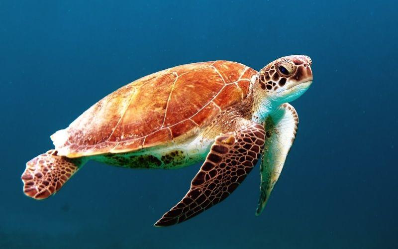 turtle-863336_1280_20190911.jpg