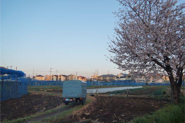 近所のあぜ道と桜とベスパカー・アペ