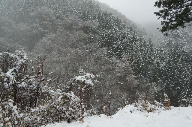 奥多摩 鳩ノ巣の雪