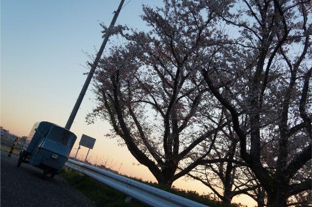 日野用水堰の桜とベスパカー・アペ