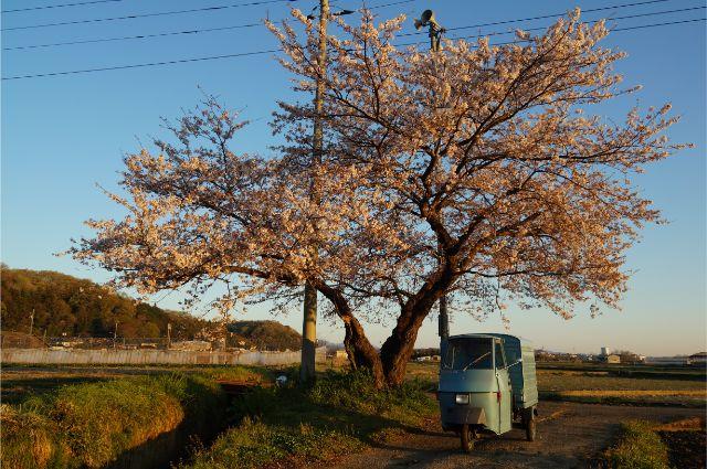 滝ヶ原の桜とベスパカー・アペ