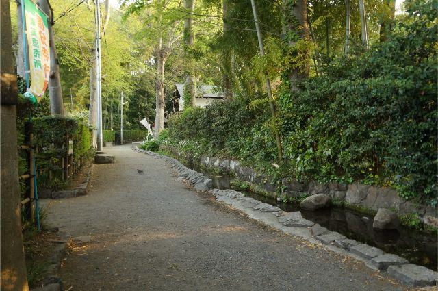 朝のお鷹の道