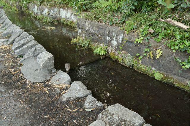 朝のお鷹の道の水路