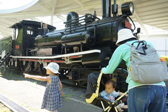 青梅鉄道公園の明治に輸入されたピーコックと家族