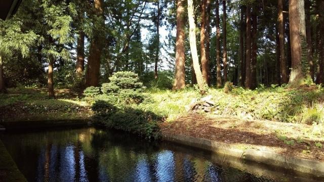 林と池を見ながら