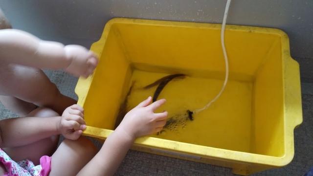 子どもたちが鮎と遊びます