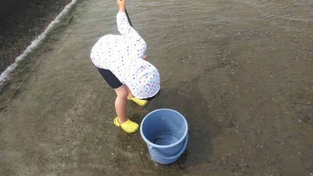 日野用水堰の鮎を見る、娘。