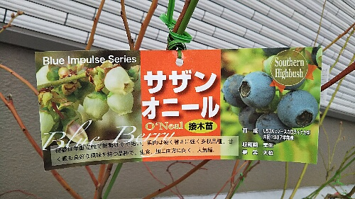 blueberry southern oneal_20190224_01up