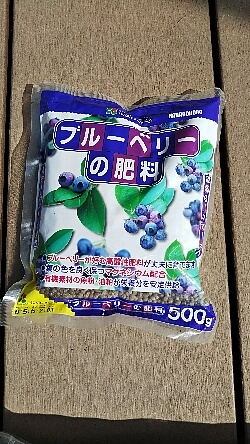 blueberry_20190324_04up.jpg