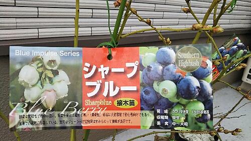 blueberry_sharpblue_20190224_01up.jpg