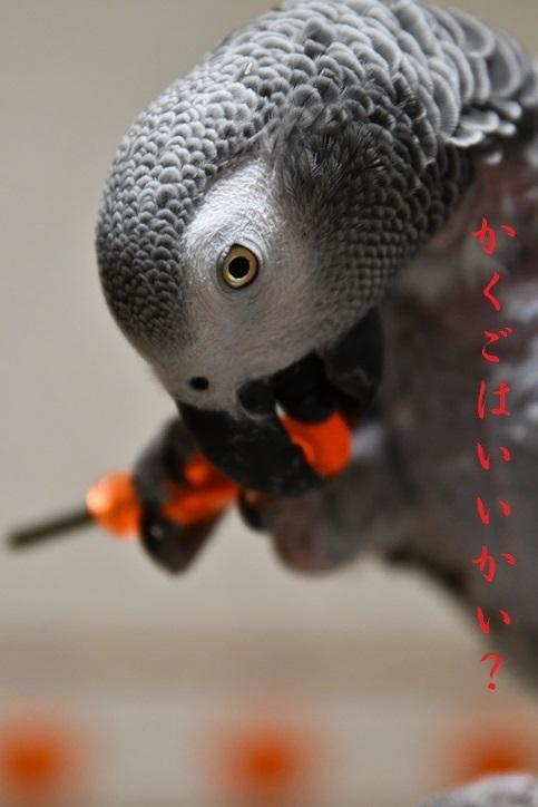 軍ちゃん2018・10・22・2