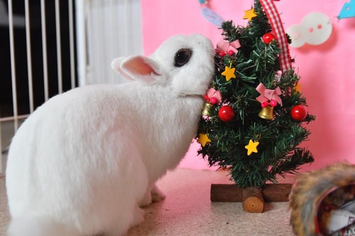 みるくクリスマス