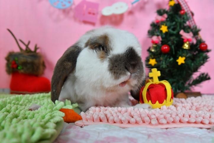めるクリスマス