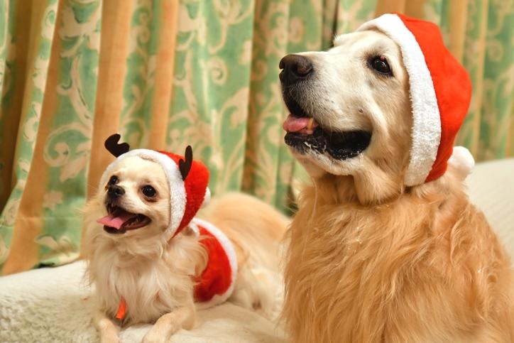 わんこずクリスマス