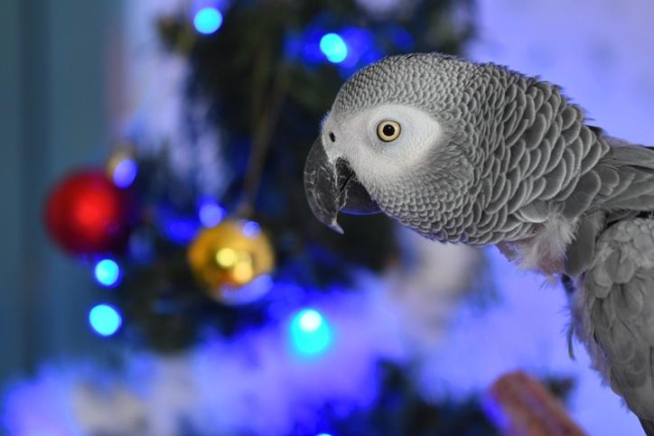 軍ちゃんクリスマス