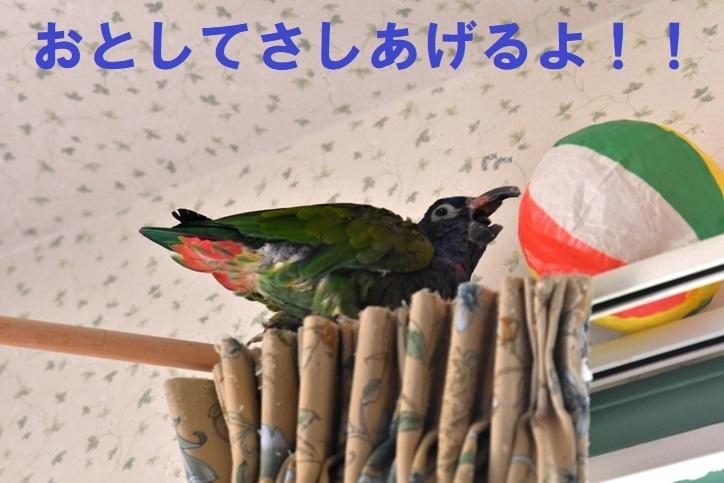 DSC_4786.jpg