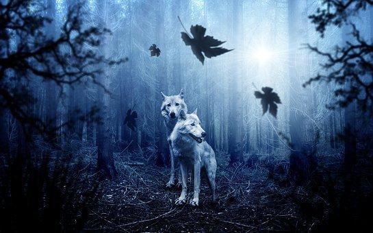 wolf-2864647__340.jpg