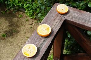 鳥の餌オレンジ3