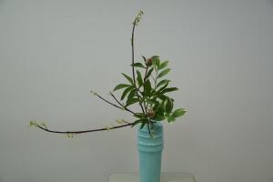 瓶花芍薬とサンゴ水木