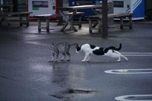 オアシスの猫21