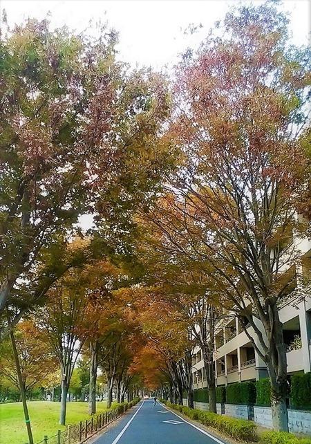 181111keyaki_nogawa_ryokuti-park