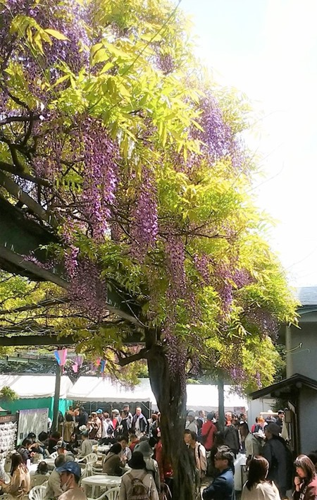 190428senen_no_fuji