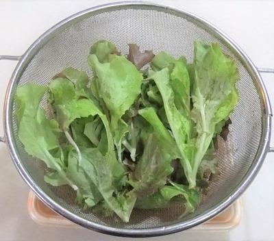 190502leaf_lettuce3