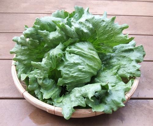 190505tama_lettuce2