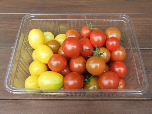 190711mini_tomato